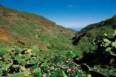 Spain, Canarias, Gran Canaria, Barranco de Guayadeque
