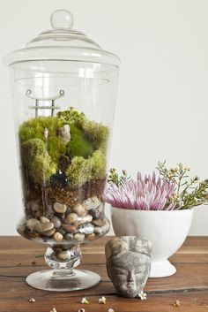Terrarium DIY Pictures I have this big apothecary jar already - could use for terrarium