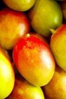 Cómo conseguir que una semilla de mango eche raíces