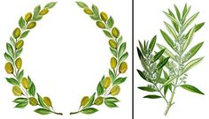 Olive tree tattoo beautiful 17 ideas for 2019 Oak Leaf Tattoos, Olive Tree Tattoos, Olive Branch Tattoo, Olive And Vine, Blatt Tattoos, Catholic Tattoos, Tree Sketches, Wreath Drawing, Wreaths And Garlands