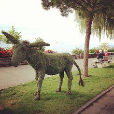 Donkey in Montreux Riviera - Artistic work Swiss Switzerland, Donkey, Flora, Horses, Artist, Animals, Beautiful, Animales, Animaux
