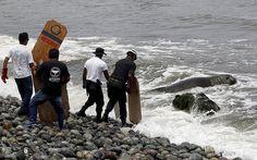 Un elefante de mar desorientado es devuelto al mar por voluntarios en Miraflores, Perú (Mariana Bazo, 2016)