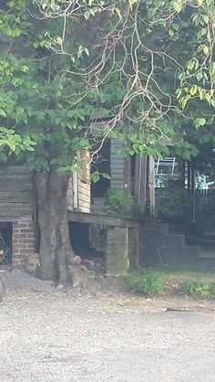 Freedman Slave Cabins Rosemont Ave Charleston, SC