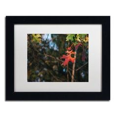 "Trademark Global 'Oak' by Jason Shaffer Framed Photographic Print Matte Color: White, Size: 16"" H x 20"" W x 0.5"" D"