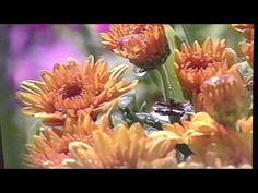 Arrowhead Springs promo video - YouTube