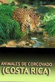Free-eBooks.net has a few non-fiction animal books in Spanish.  This one is about animals from a particular part of Costa Rica.  Animales de Corcovado (Costa Rica) cover