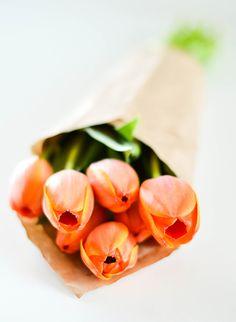 orange tulips .