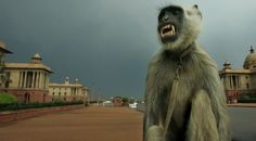 India's Parliament Hires People To Scare Monkeys | VITAFUNNY