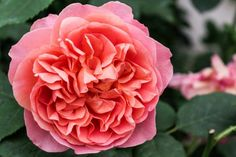 HGTV Gardens shares a gallery of 21 gorgeous roses.