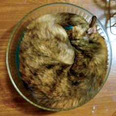 From the Archives: Salad Days, and a Certain Tortie in the Salad Bowl