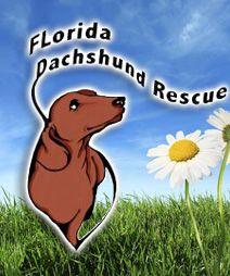 Florida Dachshund Rescue – FLDR