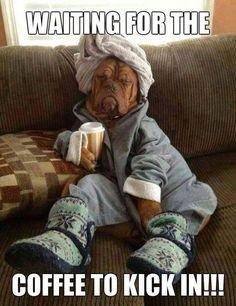 64 Ideas Funny Good Morning Humor Dogs For 2019 - Guten Morgen Lieblingsmensch Funny Animal Memes, Dog Memes, Funny Animal Pictures, Cute Funny Animals, Funny Dogs, Cute Dogs, Funny Memes, Funny Quotes, Coffee Memes Funny