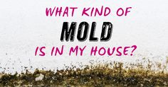 it's gross and causes all sorts of health problems. Is it growing in your home? Air Conditioning Services, Heating And Air Conditioning, Heating And Cooling, Health Problems, My House, Cleaning, Fresh, Cool Stuff, Cool Things
