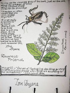 Image result for nature journaling