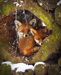 Two little foxies...