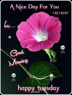 Good Morning Tuesday, Good Morning Happy, Good Day, Plants, Buen Dia, Good Morning, Hapy Day, Plant, Planets