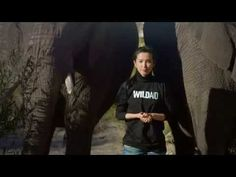 Please repin Li Bingbing, Ivory Trade, African Animals, Singer, Actresses, Youtube, Mens Tops, Elephants, Beauty