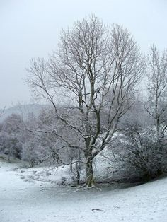 a frosty winter landscape, ice covered trees - free stock photo from www.freeimages.co.uk