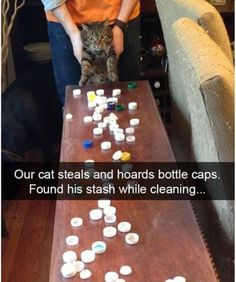 My cat is a hoarder funny pics, funny gifs, funny videos, funny memes, funny jokes. LOL Pics app is for iOS, Android, iPhone, iPod, iPad, Tablet