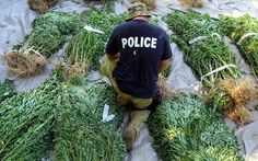 Why+Is+Marijuana+Banned?+The+Real+Reasons+are+Worse+than+You+Think