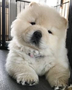 """Chow Chow Dog Cute necklace 18/"""""""