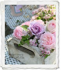 Jo-Ann Coletti photo, lovely roses