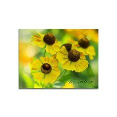 Blumenbild Tanz der Sonnenbräute | Leinwandbild