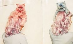 pastel cats in my hair??