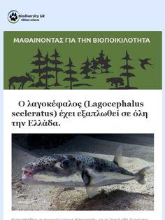 Μαθαίνοντας για την βιοποικιλότητα - Τεύχος #006