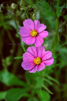 https://flic.kr/p/AXYsRJ | fiori