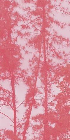 Pink Forest.   http://www.softgallery.dk/  www.circuslondonpr.com