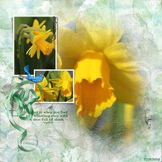 Crzymom's Tidbits: Daffodils