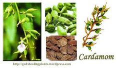 Indian Essential Oils, Essential Oils in India   Aryan Exports