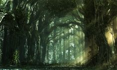 Wood cathedral. Old trees with arching branches in the forest
