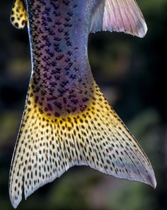 I like this photo for the sheer fact that its unique. Most people never get this close to fish, let alone take a picture of the beautiful details that fish may have on their scales.