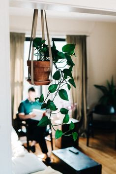 Indoor gardening in a tiny apartment - Plants are amazingly resilient. Persist, learn, grow
