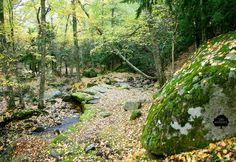 El Bosque de Canencia. Situado en la zona norte de Madrid, en la parte meridional del Valle Alto del Lozoya. Extensos prados y pastizales, que se alternan con bosques de roble y acebo. También crece el pino silvestre, el abedul (abedular de Canencia), el tejo, el serbal, el mostajo, el chopo, el piorno y la zarza.