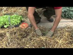 Come fare l'orto invernale: consociazione (seconda parte)