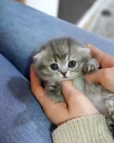 small little kitten so cute !!