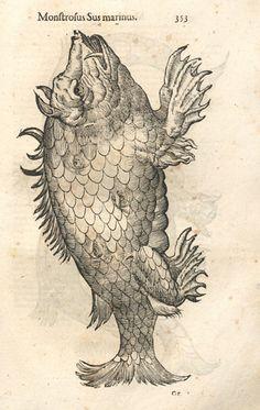 Ulisse Aldrovandi: Monstrorum historia (1642), søvæsen.