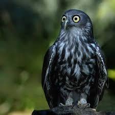 Image result for strange owls