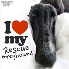 <3 Black greyhound rescue