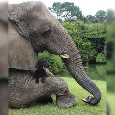 When your best friend is a pachyderm or a dog... from - @Lrihendra http://ift.tt/2xuPQN2
