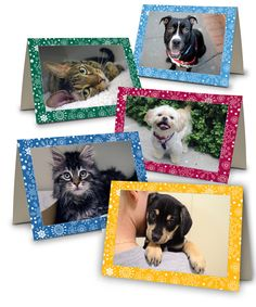 88 best love a pet images on pinterest cut animals funny animals 2012 aspca holiday 10 card set m4hsunfo