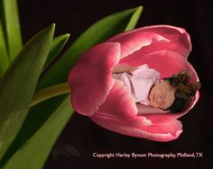 Learn how to create a fantasy image in the Anne Geddes style, using stock photography and Photoshop. Image used with permission.