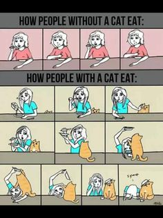 how people eat, with and without a cat.