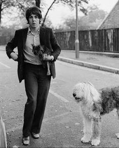 Ringo Starr, Paul Mccartney, John Lennon, George Harrison, Martha My Dear, Old English Sheepdog Puppy, Sir Paul, John Paul, Sheep Dog Puppy