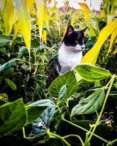 Cat between beans Beans, Bird, Cat, Prints, Photography, Animals, Instagram, Photograph, Animaux