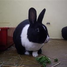 Buggs is looking for a home with Bunny (5115). They are looking for a quiet home where they can have time spent with them as they are a liitle shy. Since being at the shelter they have grown in confidence and will eat food out of your hands.