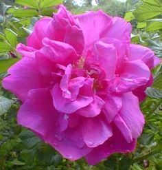 1162 best thorny flowers and plants images on pinterest in 2018 magnifica mightylinksfo